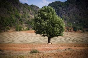 Myanmar-Kalaw-Inle-31