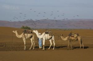 marruecos-desierto-16