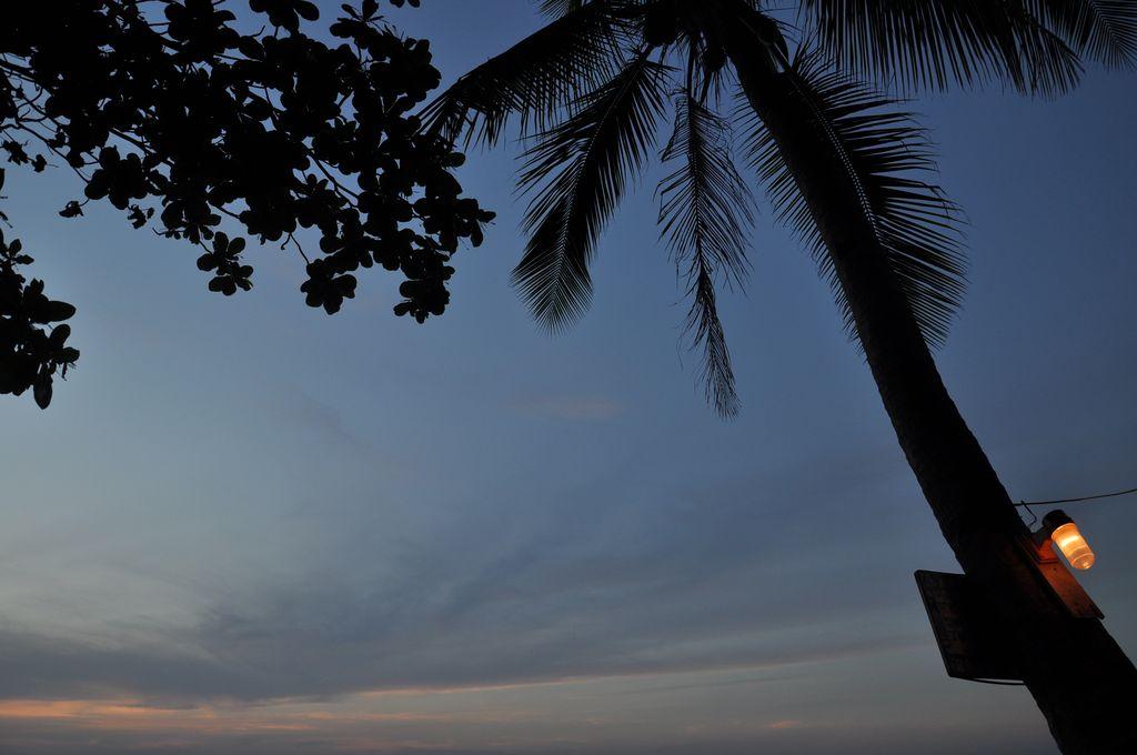 Palmeras al atardecer en Koh Lanta