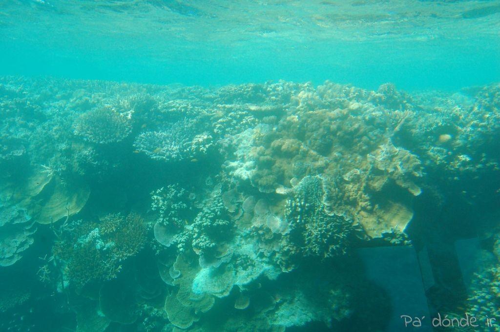 Arrecife 3